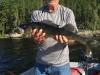 Ken Phelps 26 inch
