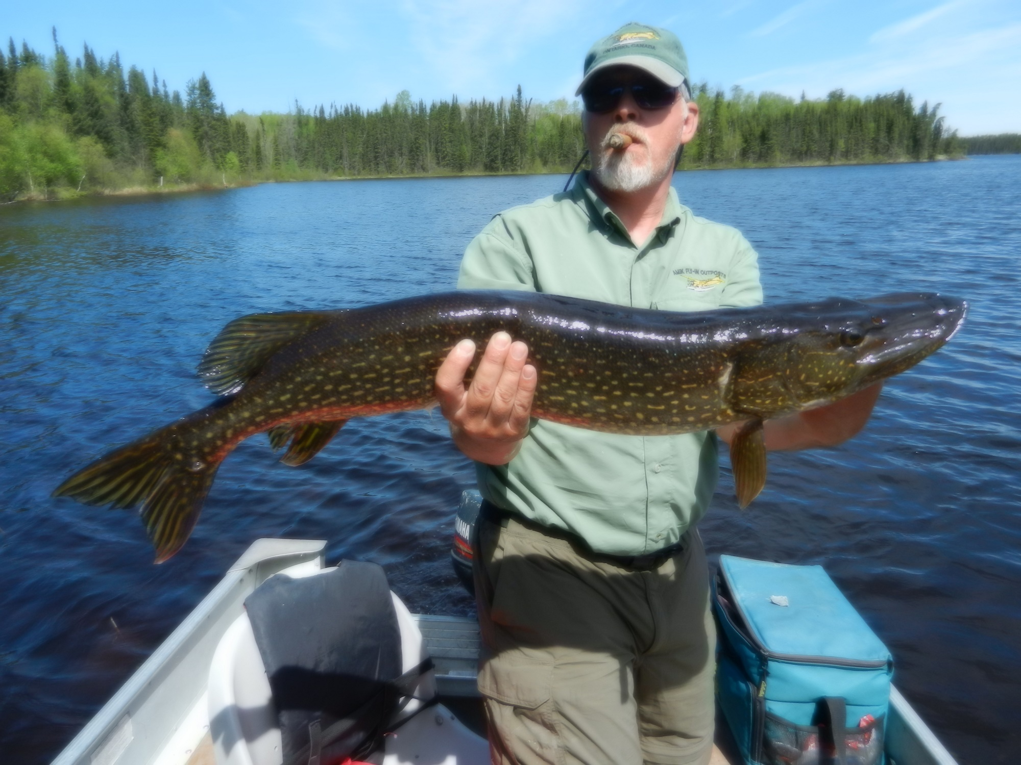 Findlay lake trophy fish 2014 canadian fly in fishing for Canadian fly in fishing