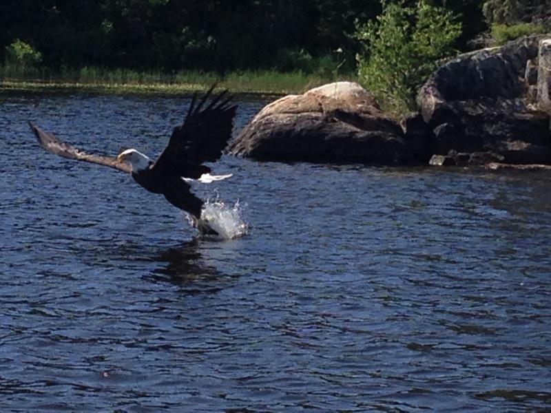 Amik 2015 eagle 1